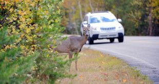 What-To-Do-When-Your-Car-Collides-With-Wildlife.jpg